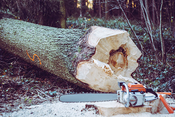 chainsaw used in cutting a log