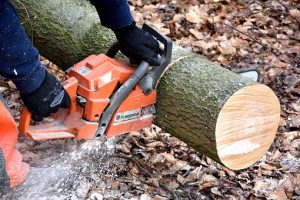 cutting a tree using a chainsaw