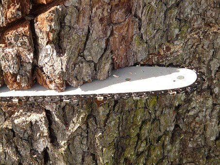 chainsaw stuck in a tree