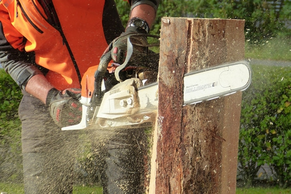 Man Cutting Tree Using Chainsaw