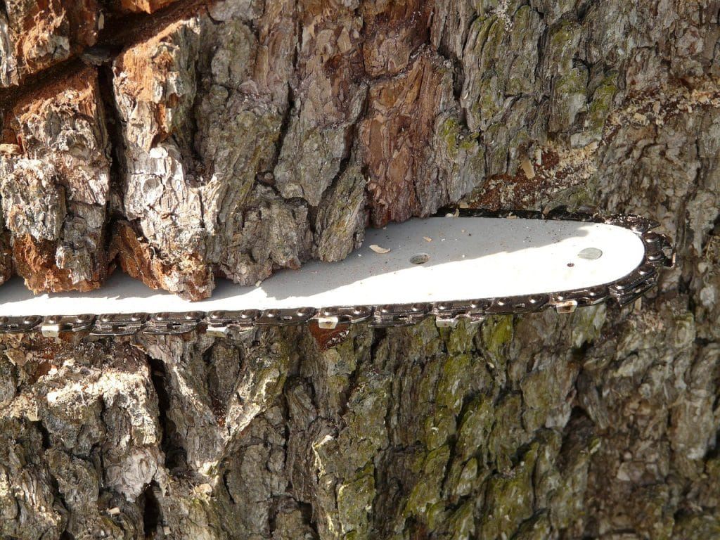 saw blade of husqvarna 440 chainsaw embedded into a tree trunk